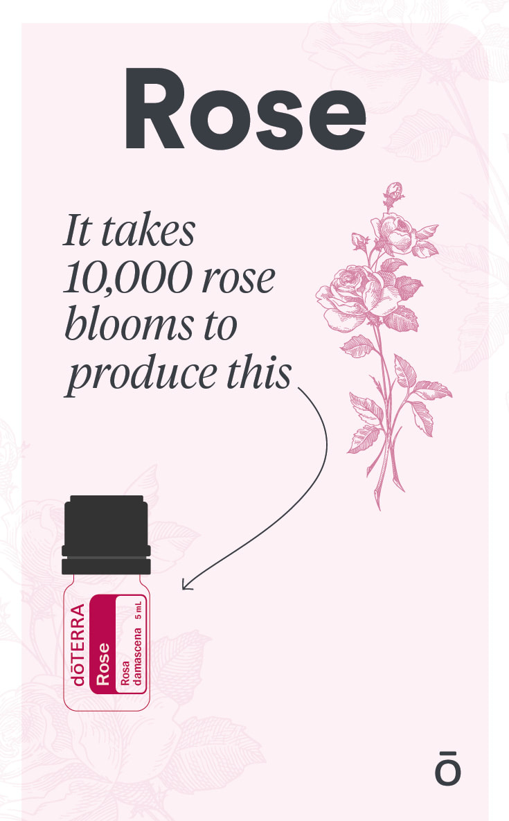 It takes 10,000 rose blooms to create one bottle of rose essential oil. Link to purchase rose oil.